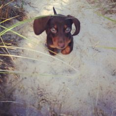 See more of Hank at ShowMeYourWiener on Instagram