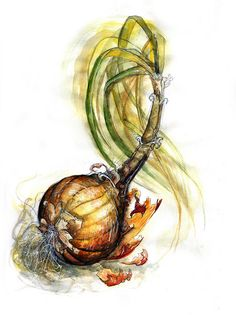 Onion Study II by Amy Holliday, via Flickr