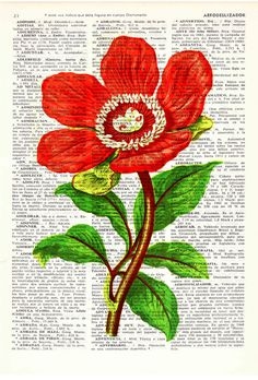 Red Peony flower Vintage Book Print Dictionary or by PRRINT