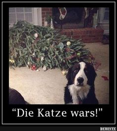 Mizan - Welcome my homepage Dog Christmas Pictures, Christmas Dog, Christmas Humor, Merry Christmas, Funny Animal Pictures, Dog Pictures, Happy New Year Funny, Funny Happy, Animals And Pets