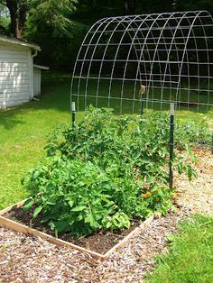 Cucumber trellis, i like the arch, could plant something on the other side but they have the freedom to continue down the other side of the arch