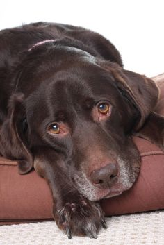 Osteosarcoma is the most common bone cancer in dogs. Here's how it can be diagnosed & treated