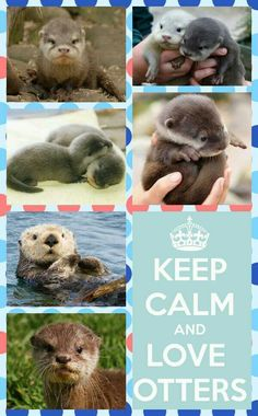 For the love of otters!