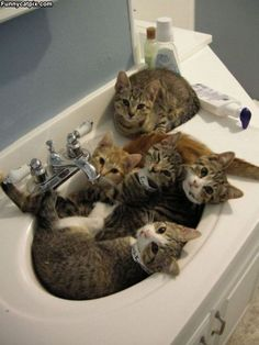 "Cats on Tap, ""Oh dear, they've discovered our secret meeting place!"""