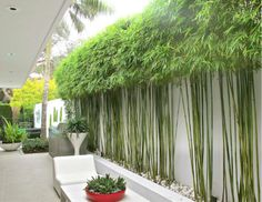 The Best 15 Awesome Bamboo Garden Design To Beautify Home Yard Want to redesign the garden in your home, you can apply a bamboo garden design to decorate your home landscape. With this bamboo garden, you will auto. Bamboo Landscape, Modern Landscape Design, Landscape Plans, Garden Landscape Design, House Landscape, Privacy Landscaping, Backyard Privacy, Backyard Fences, Modern Landscaping