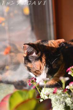 里親さんブログロンパースの時はちょびっとね・・・* ̄m ̄ウフッ - http://iyaiya.jp/cat/archives/71794