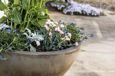 Container gardening in the shade can be a bit tricky. This list of blue plants for containers in the shade will have the pots on your patio, walkway or porch looking beautiful all summer long. Potted Plants For Shade, Blue Plants, Tall Plants, Window Box Flowers, Shade Flowers, Blue Flowers, Garden Yard Ideas, Diy Garden Projects, Garden Pots