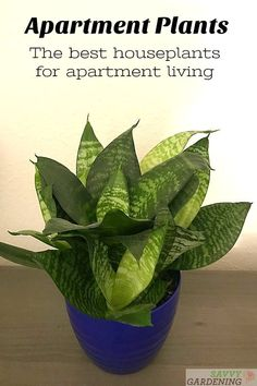 Landscaping Software - Offering Early View of Completed Project Looking For The Best Houseplants For Apartments? Here Are 15 Beautiful, Low-Maintenance Apartment Plants That Fit Into Small Living Spaces Perfectly. Apartment Plants, Apartment Living, House Plants Decor, Plant Decor, Small Space Living, Living Spaces, Small Spaces, Organic Gardening, Gardening Tips