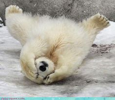 Really polar bear?!
