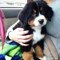 From @maslowtheberner: Those puppy eyes though #cutepetclub [source: http://ift.tt/2l9BfEn ]