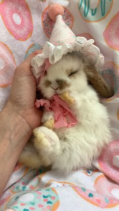 Jan 2020 - This little fluff is so super cute all dressed up and resting. Super soft and oh so sweet all snuggled up. Baby Animals Super Cute, Cute Baby Bunnies, Funny Bunnies, Cute Little Animals, Cute Funny Animals, Cute Cats, Cute Bunny Pictures, Baby Animals Pictures, Pet Bunny Rabbits