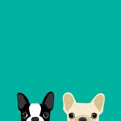 Boston Terrier & French Bulldog 2 Art Print