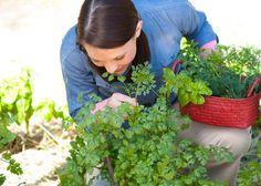 Přehled všech jedlýíh bylinek vyskytujícich se na území cr