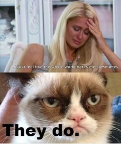 Grumpy Cat on Paris Hilton: Paris Hilton: I just feel like the whole world hates me sometimes. Grumpy Cat: They do. It appears grumpy cat doesn't like rich soci Grumpy Cat Quotes, Funny Grumpy Cat Memes, Funny Cats, Funny Memes, Animal Jokes, Funny Animal Memes, Cute Funny Animals, Funny Quotes, Funniest Animals