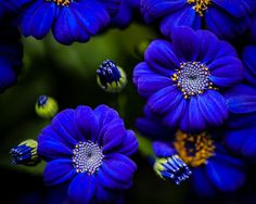 Blue at Allan Gardens by Monica Rooney
