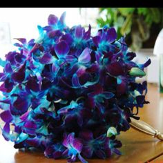 Blue Dendrobium Orchids- The only way may wedding bouquet could have been more beautiful-and trust me, I tried to get them!