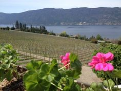 10 Things I Learned in Okanagan Valley Wine Country, BC (Part 1) on http://wanderlustandlipstick.com/blogs/wanderlushdiary