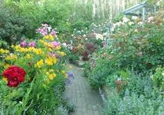 Image result for gawler street mt barker photos Magic, Street, Plants, Photos, Pictures, Photographs, Flora, Walkway, Plant