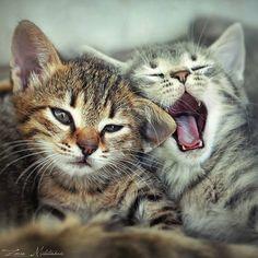 Kitten's World