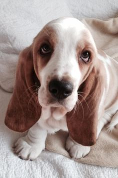 Sad puppy!