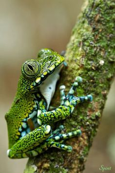 Bon Aucun coût Reptiles and amphibians Réflexions Funny Frogs, Cute Frogs, Nature Animals, Animals And Pets, Cute Animals, Reptiles Et Amphibiens, Mammals, Beautiful Creatures, Animals Beautiful