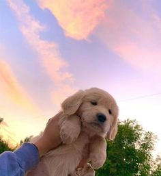 Super Cute Puppies, Baby Animals Super Cute, Cute Baby Dogs, Cute Little Puppies, Cute Dogs And Puppies, Cute Little Animals, Cute Funny Animals, Doggies, Dog Baby