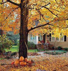 Fall Lawn and Garden Prep