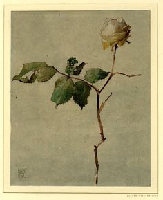 December Rose...by Alfred William Rich