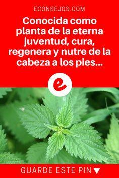 Ortiga beneficios | Conocida como planta de la eterna juventud, cura, regenera y nutre de la cabeza a los pies.