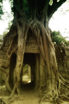 Cambodia. Every photo I see of Cambodia makes it sem like the most exotic place on earth.