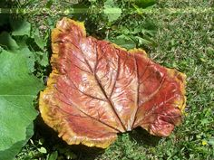 Red stained Rhubarb leaf with ochre edging Painting Cement, Cement Art, Concrete Casting, Sand Casting, Concrete Bird Bath, Concrete Leaves, Concrete Projects, Weed, Plant Leaves