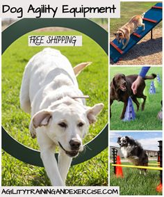 Dog Agility equipment or dog courses with most common pieces of jumps, walks, weave courses, and tunnels. You can go all-out and use every piece of competition equipment or stick to a few basics. Agility for home, club, daycare or dog parks! We offer you full dog agility courses or single exercise items. Free Shipping!  Dog Agility | Dog Exercise | Dog Training | Dog Parks |  #dogagility #dogfitness #dogexercise #dogparks Agility Training For Dogs, Dog Training Videos, Best Dog Training, Dog Agility, Giant Dog Breeds, Giant Dogs, Big Dog Toys, English Dogs, Dog Organization