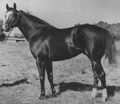 Top Moon, 1960, by Moon Deck, out of Rica Bar, by Barred. AAA stakes winner, 15 wins. Sire of 1,829 AQHA foals. Died 1984.