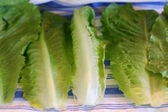 know-your-ponics-growing-lettuce