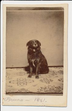 """Bruno 1861"" charming CDV of Civil War era dog GREAT image! Antique photograph! in Collectibles, Photographic Images, Vintage & Antique (Pre-1940), CDVs 