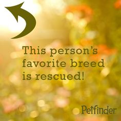 Repin to share your rescue pet pride!  Click through to read 6 common myths about rescue pets.