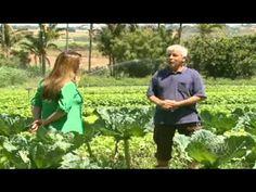 Caminhos da Roça - Agricultura Orgânica.wmv