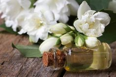Gardenia Essential Oil Uses and Benefits for Health - EverPhi Essential Oils For Depression, Fennel Essential Oil, Jasmine Essential Oil, Sandalwood Essential Oil, Cinnamon Essential Oil, Essential Oils For Headaches, Grapefruit Essential Oil, Lemon Essential Oils, Essential Oil Uses