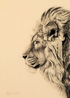 Lion tattoos hold different meanings. Lions are known to be proud and courageous. - Lion tattoos hold different meanings. Lions are known to be proud and courageous creatures. Animal Sketches, Animal Drawings, Drawing Sketches, Art Drawings, Drawing Tips, Pencil Drawings, Kunst Tattoos, Leo Tattoos, Body Art Tattoos