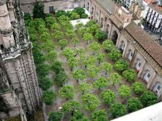 Landscape-Architecture - The Patio of the Oranges at the Seville Cathedral, seen from the Giralda bell tower, Sevilla, Spain. Credit: John Picken, CC 2.0