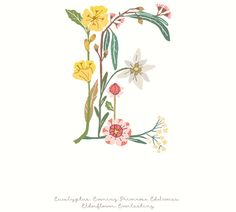 Letter E - Botanical Alphabet Initial Art, Letter Art, Embroidery Letters, Embroidery Art, Watercolor Projects, Watercolor Paintings, Abc Crafts, Flower Alphabet, Web Design