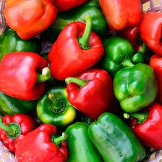 Pepper 'Keystone'-Vigorous plants produce continuous, heavy yields of large, blocky fruit. Dark green Peppers mature to bright red. Considered superior to the old California Wonder in size, taste, and yield.