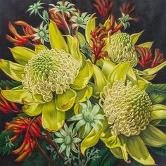 Fiona Craig - Fine Art - White Waratahs Flannel Flowers and Kangaroo Paws 3 Australian Native Flowers, Australian Art, Flannel Flower, Kangaroo Paw, Nz Art, Floral Artwork, Pictures To Paint, Botanical Prints, Art For Sale