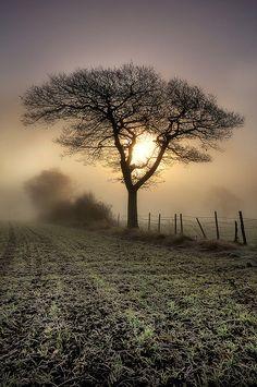 Tree | Flickr -autumn in Britain.