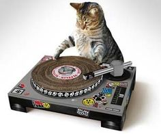 """LOL! """"You might not know it, but cats are natural DJs. Now you can let Mr. Fluffums practice his wicked DJ skills while also keeping his nails sharp with these cat scratch posts shaped like turntables that will actually spin when your cat puts his claws into it."""" $39.99"""