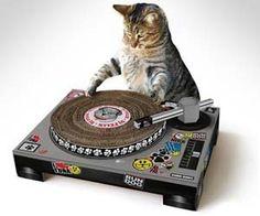 Cat scratch post shaped like turntable (arranhador para gatos). Really nice and…
