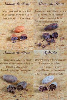 Tout savoir sur le cacao cru : fève, poudre, beurre, apport nutritionnels, provenance...