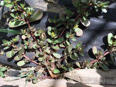 Šrucha zelná Pesto, Fruit, Plants, Food, Essen, Meals, Plant, Yemek, Eten