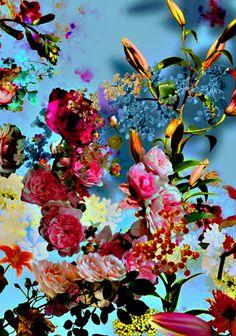 ❈ Fleurs Foncées ❈ dark art photography flowers  botanical prints - Isabelle Menin