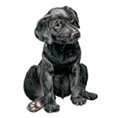 "Check out our website for even more information on ""Labrador retrievers"". It is an exceptional place to find out more. Small Puppies, Dogs And Puppies, Charcoal Lab Puppies, Black Puppy, Most Beautiful Dogs, Cartoon Sketches, Animal Books, Labrador Retriever Mix, Pet Life"